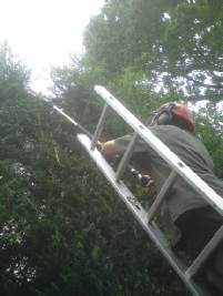 Townscape Hedge cutting works
